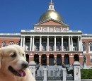 Dog at Statehouse