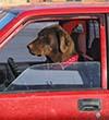 dog truck 100w