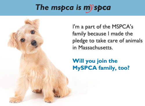 MySPCA Fetch a Friend eCard