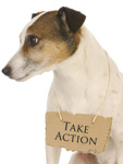Take Action Dog