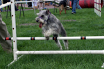 Past MSPCA-Angell Walk for Animals Photos.