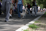 Walkers at the MSPCA-Angell Walk for Animals