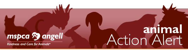 MSPCA-Angell: Animal Action Alert