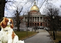 Statehouse Dog