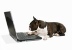 dog with computer shutterstock 188x100